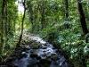 Guápiles Stream