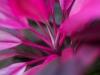 Flor(escent)a